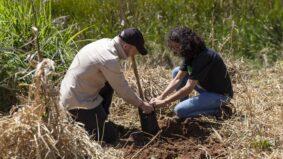 Restauração florestal na Mata Atlântica ajuda negócios locais