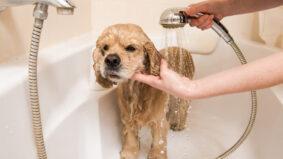 Conheça receita caseira que facilita a limpeza de seu pet