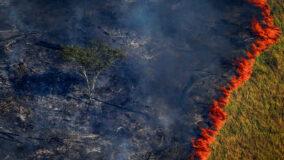 Amazônia já emite mais CO2 do que é capaz de absorver