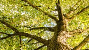 Doe árvores para restaurar áreas desmatadas no Brasil